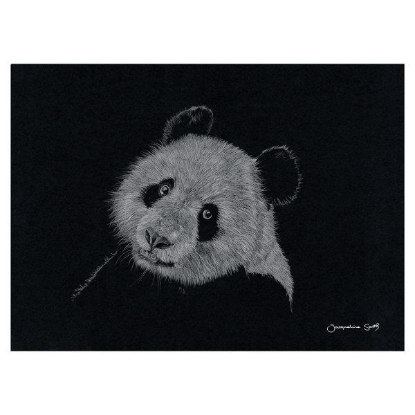 Panda in pencil