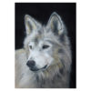 Wolf in pastel