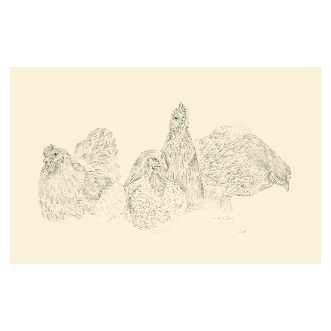 Cochin chickens study