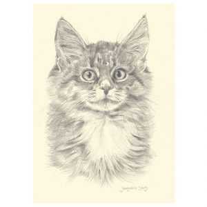 Kitten in pencil