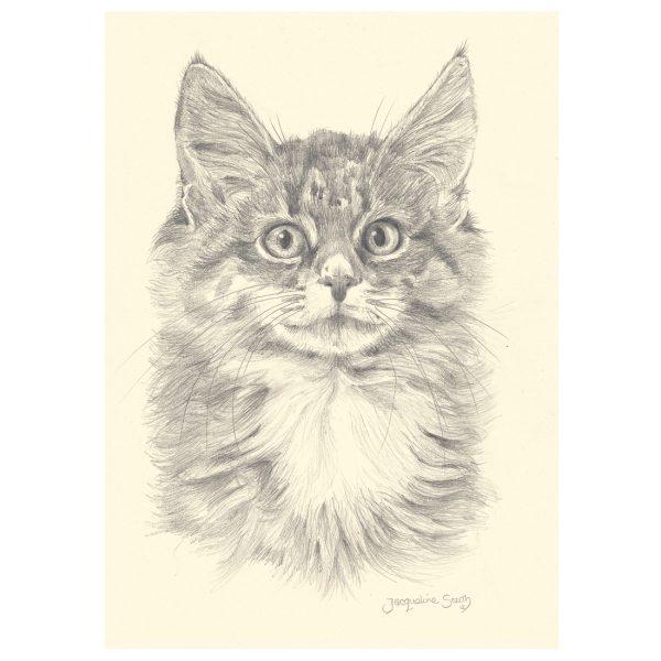 Kitten in pencil