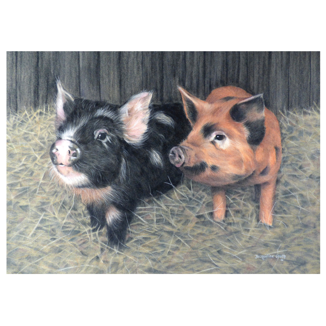 Two pigs in straw