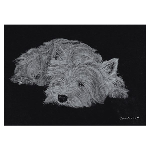 West Highland Terrier in pencil