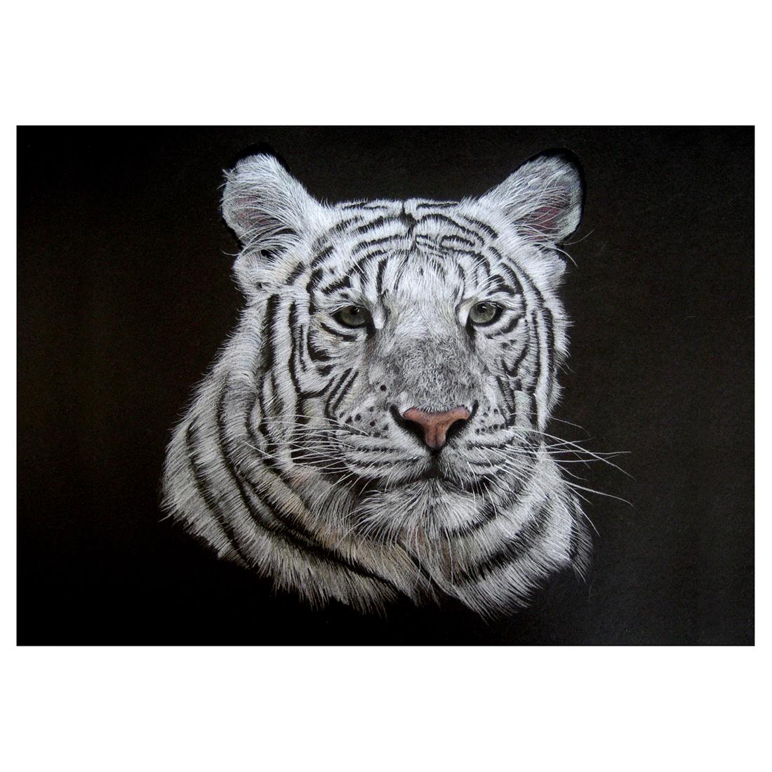 White Tiger in pencil