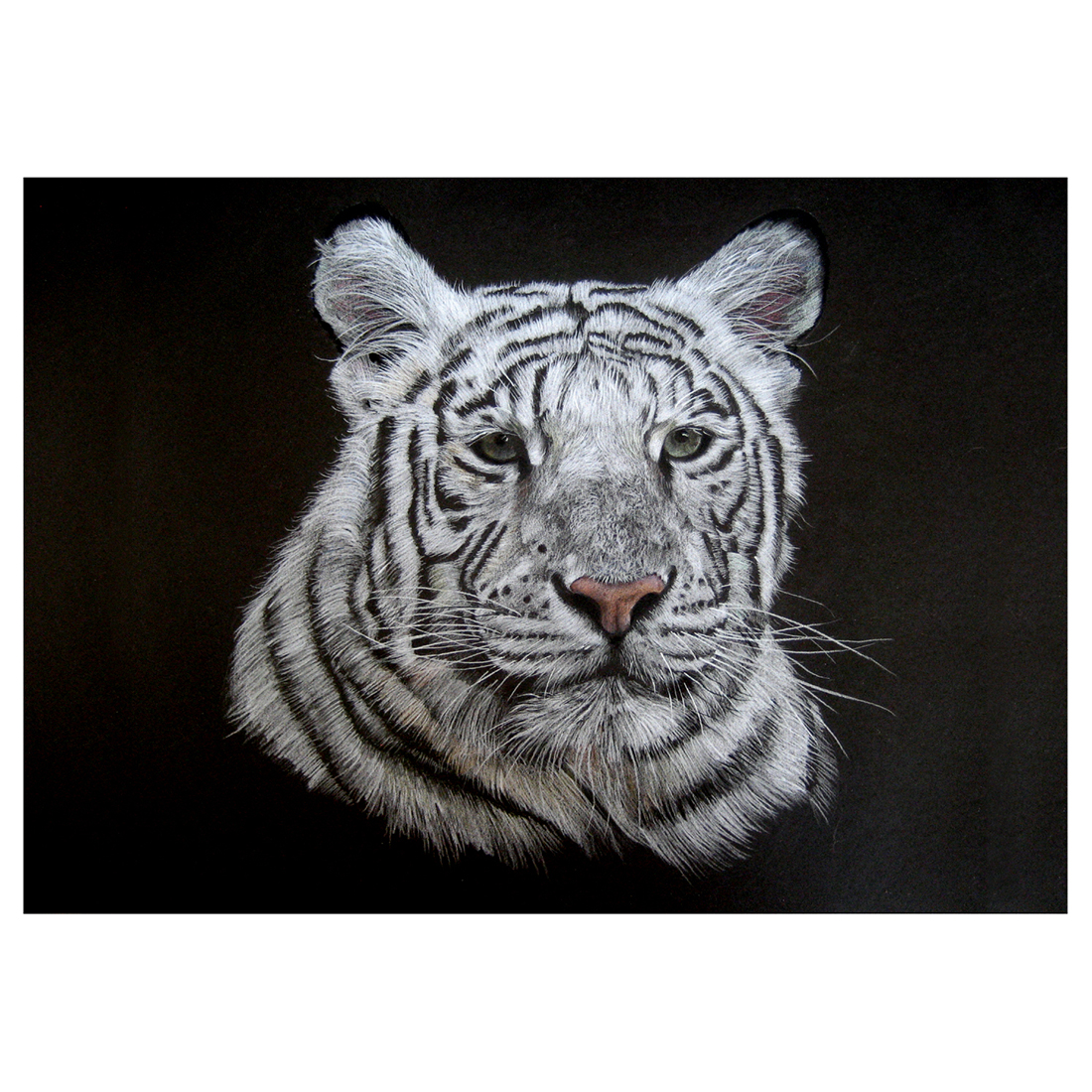 White Tiger in pencil